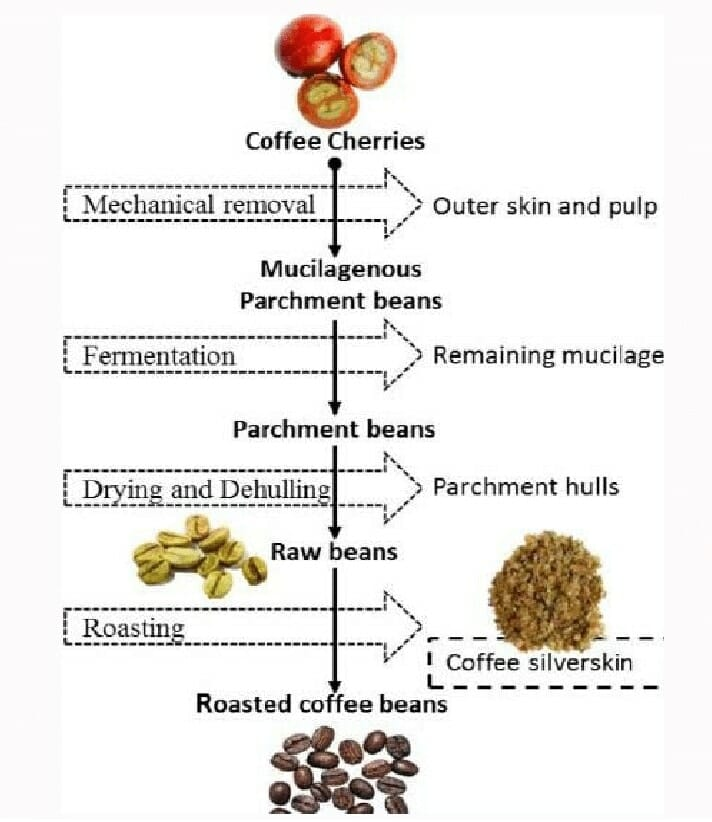 Diagram of coffee silverskin production from wet processing1